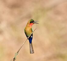 Red-throated Bee-eater, brown background by Sue Robinson