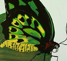 """Cairns Birdwing"" by Julie Gilmore"