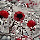 Iceberries by Amanda Moscoe