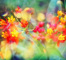 Autumn Flowers by Vitta