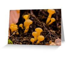 Yellow mushrooms Greeting Card