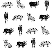 Piggies by Compassion Collective