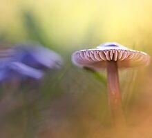 Mystic Mushroom.... by Bob Daalder