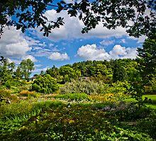 Summer Splendour by Colin Metcalf