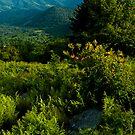 Appalachia Greening by Miles Moody