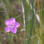 Lone Mauve Star by Kathi Arnell