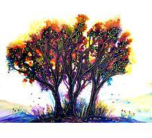 Tree Promise Photographic Print