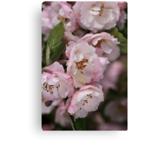 Marshmallow Pink & White Blossom Canvas Print