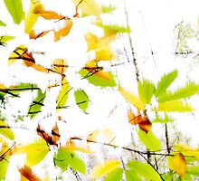 Leaves Splash Abstract 2 by Natalie Kinnear