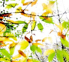 Leaves Splash Abstract 1 by Natalie Kinnear