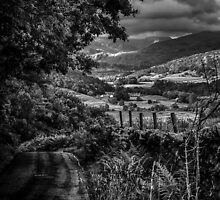 Down to the valley by Alan E Taylor