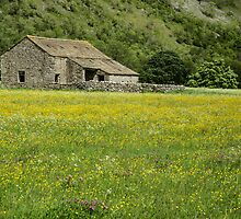 Barn in a flower meadow by Judi Lion