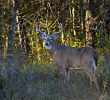 Buck at Sunset by Jim Cumming