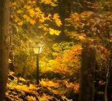 A Light In The Forest by Diane Schuster