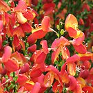 Burning Bush by BlueMoonRose