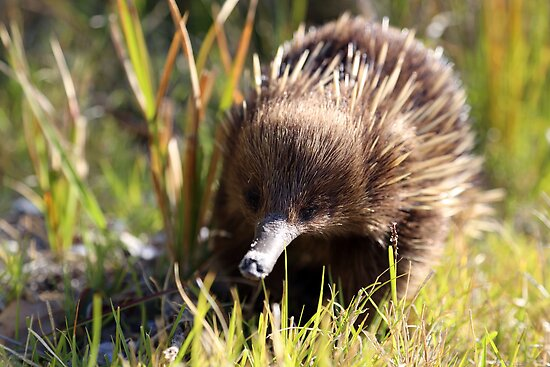 exploring echidna I by geophotographic