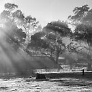 ~ Ray of Light ~ by LeeoPhotography