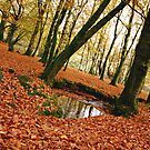 Wilson's Wood by Julesrules