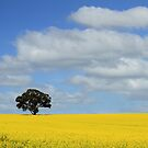 Golden Canola by Tim Coleman