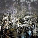 Black Water Swamp by RickDavis
