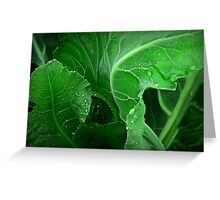 How Green the Leaves of Gardens Grow Greeting Card
