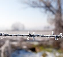 Barbed Wire by moonbloom
