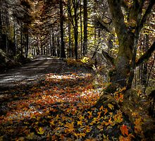 High In The Mountains ~ Fall Colors ~ by Charles & Patricia   Harkins ~ Picture Oregon