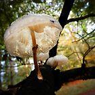 tree parasols by gruntpig