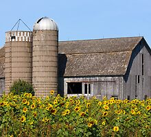Sunflower Barn by Kenneth Keifer