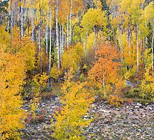 Colorful Autumn Forest In The Canyon of Cottonwood Pass by Bo Insogna