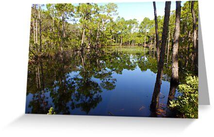 Swamp by Noelle Loberg