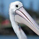 Pelican by Julie Sherlock