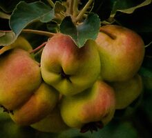 Organic lady apples by Celeste Mookherjee