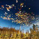 Reflection Tree by KLIMAS