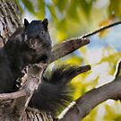 Black Squirrel Fellow by Keala