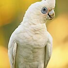 Little corella portrait by Jennie  Stock