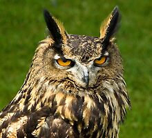 European Eagle Owl  by Kawka