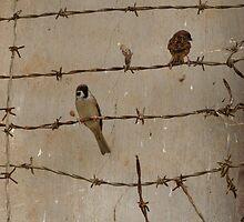 Prison Birds by xiano