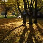 Three trees in autumn light by Javimage