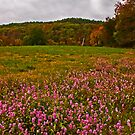 Wildflowers in Autumn by Lisa G. Putman
