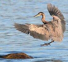 Cleared for Landing by Carl Olsen