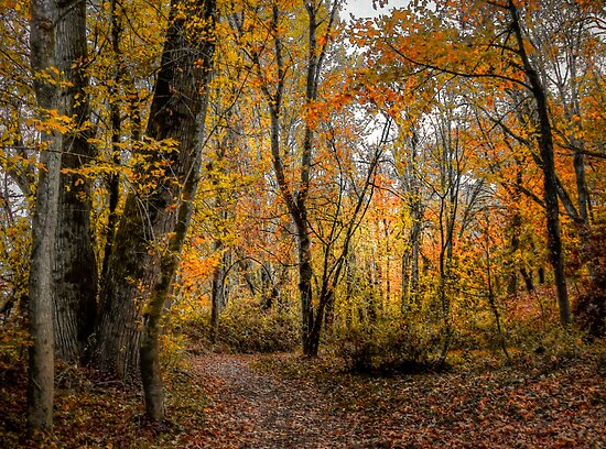 It Touches My Heart ~ Fall Colors ~ by Charles & Patricia   Harkins ~ Picture Oregon