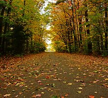 Fall Drive by Melissa Wegner