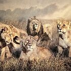 Serengeti Lions by Tarrby