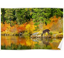 Tuti Fruti Colors and Eye Candy Reflections Poster