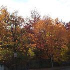 Sixth Street Embankment, Autumn Colors, Abandoned Pennsylvania Railroad Embankment, Jersey City, New Jersey  by lenspiro