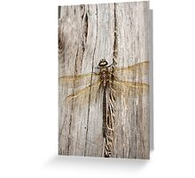 Dragonfly on Gray Log Greeting Card