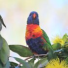 Baby Lorikeet by MudMapImages