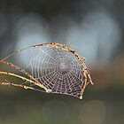 Spiderweb by MudMapImages
