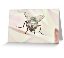 The Green Bottle Fly  Greeting Card